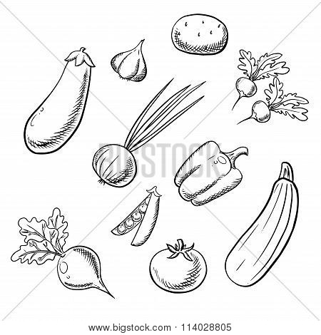 Organic fresh farm vegetables sketch icons