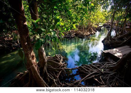 Mangrove Trees Reflected In Water Roots Rostrum Under Sunlight