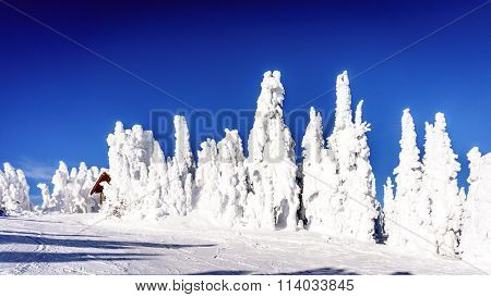 Blue skies and Snow Covered Trees