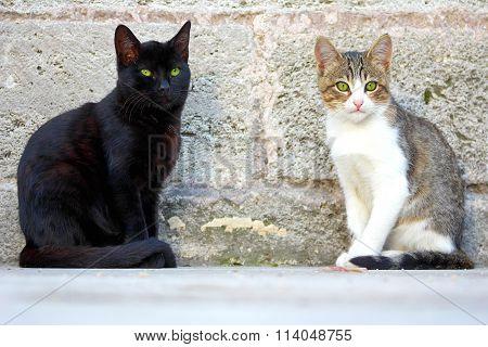 Cute Cats.