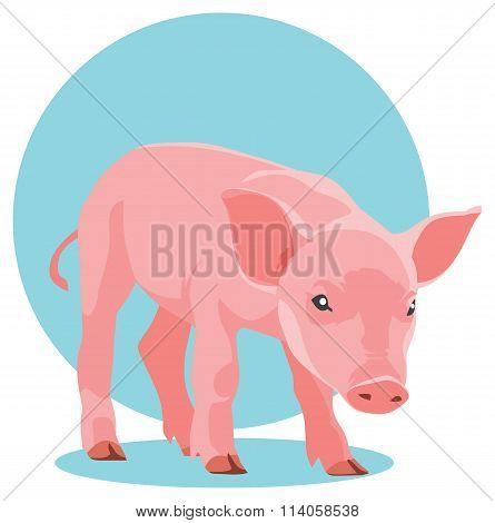 Vector suckling pig