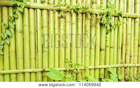 Green Bamboo Textures With Colourful Green Leaves And Vines.