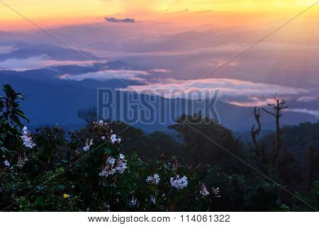 Skyline With Mist And Mountain At Doi Pha Hom Pok, The Second Highest Mountain In Thailand, Chiang M