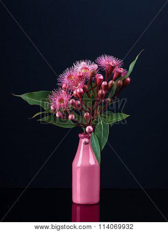 Elegant Bouquet Of Vivid Pink Eucalyptus Flowers In A Pink Vase