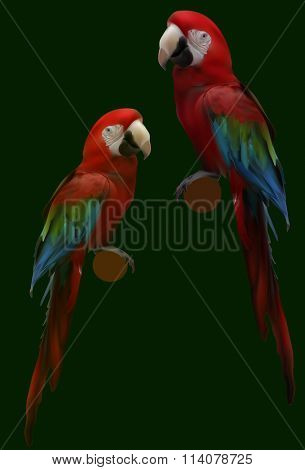 illustration with red parrots isolated on green background