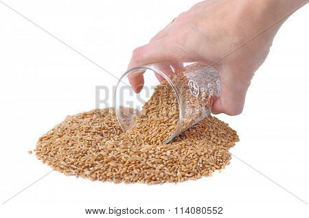 Female Hand Pours Spelt Out Measuring Cup
