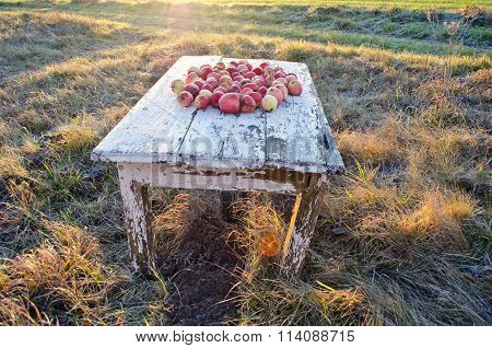 Apples On The Table In The Meadow On Autumn Morning