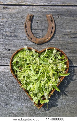 Collected Lime Tree Blossoms In Wicker Basket And Rusty Horseshoe