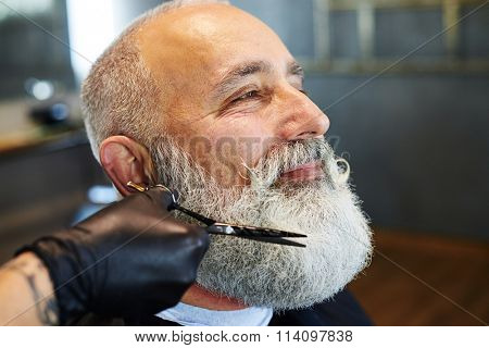 sideview portrait of grey-haired man in barber shop. barber cutting beard with scissors