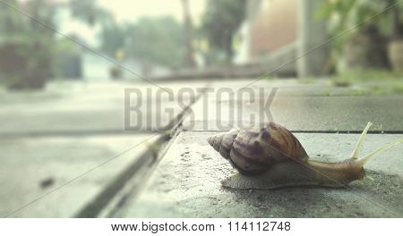 Snail Slow Animal Crawl Invertebrate Motion Nature Concept