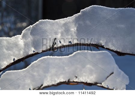 Backlit Snow Branch