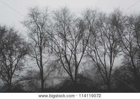 Bare Treetops On Winter Afternoon