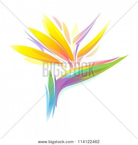 Bird of paradise Strelitzia flower