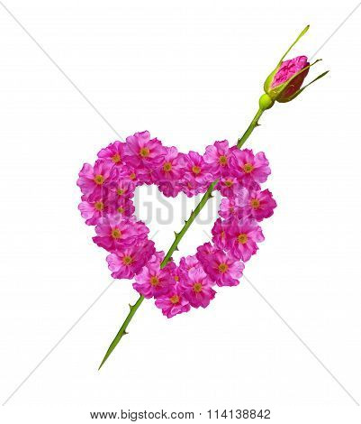 Heart Of Flowers Rose Isolated On White Background.