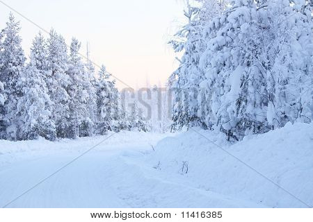 A road in the winter