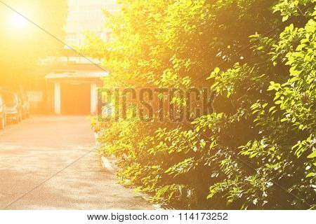 Red door house with green trees leave in morning in Taiwan, Asia.