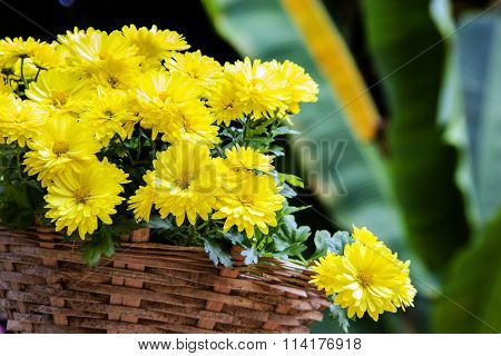 Yellow Diasy Flower Decoration Garden