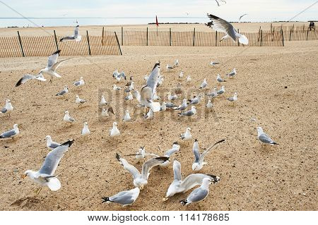 Seagulls at Brighton Beach, New York, USA