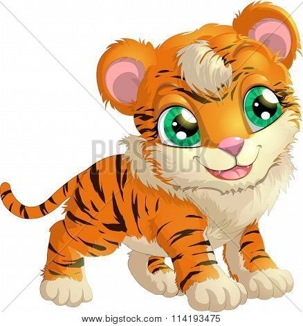beautiful tiger on a white background