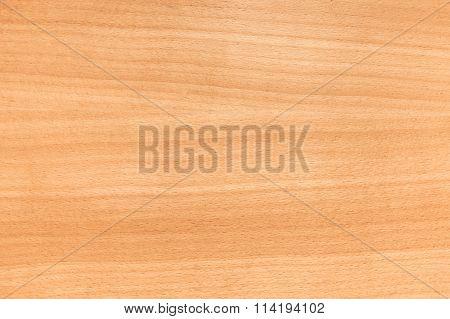 European Beech Wood, Background Photo Texture