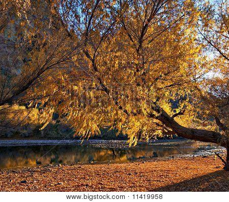 Tranquil scene of remote creek in AZ
