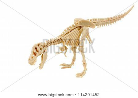 T-Rex Skeleton on a white background