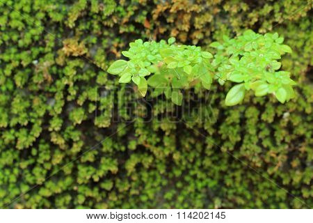 Small Tree Grow Amidst The Moss.