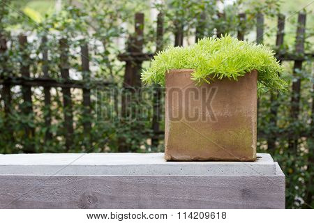 Garden Potted Plant On Table Outdoor