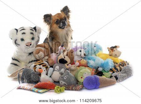 Long Hair Chihuahua And Toys
