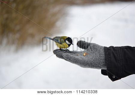 small bird on hand