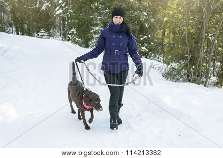Young Beautiful Female Walking with Labrador Dog