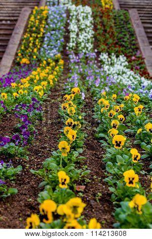 Flower On Soil