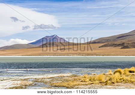 Colorful Lagoon With Flamingo In The High Andean Plateau, Bolivia