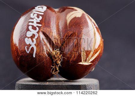 Seychelles sea's coconuts (coco de mer) - original souvenir from Seychelles.