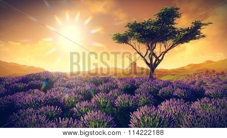 Lavender fields with  solitary tree