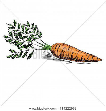 Appetizing Carrot With Leaves