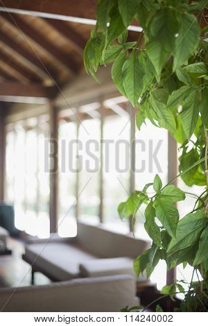 Detail Of A House Plant In A Living Room