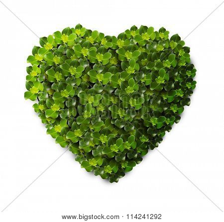 Grass and plants, small green heart. During the Valentine season. on white background