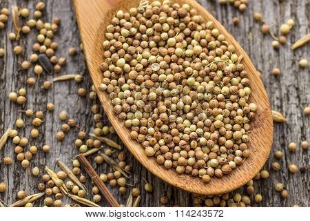 Dried Coriander Seeds In Wooden Spoon On Old Wooden Table