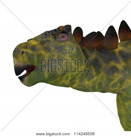 Huayangosaurus Dinosaur Head