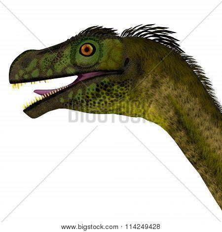 Ornitholestes Dinosaur Head