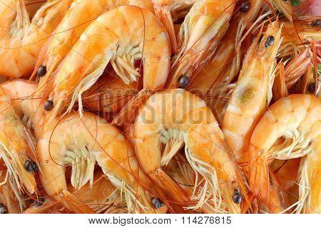 Close-up Grilled Shrimp.