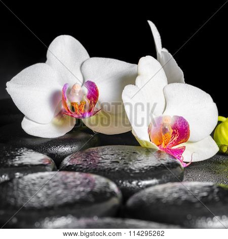 Beautiful Spa Still Life Of Blooming White And Red Orchid Flower, Phalaenopsis With Dew On Black Zen