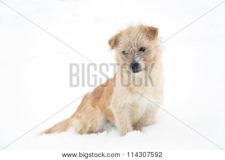 Cute dog sitting in the snow