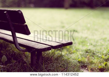Empty Wooden Bench in Park After Rain