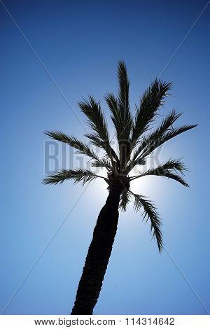 Tall Palm Against Sunny Sky