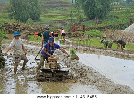 people are cultivating the paddy field
