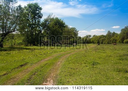 Landscape Of A Valley, Footpath, Trees, Sky And Grazing Cows
