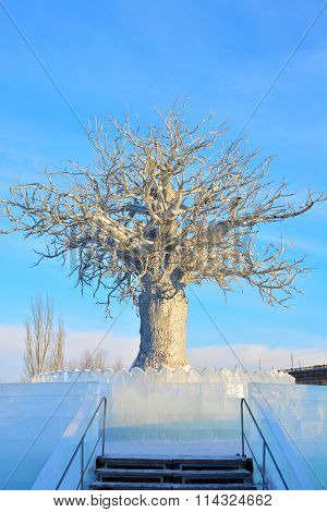 White tree in ice town in Omsk, Siberia