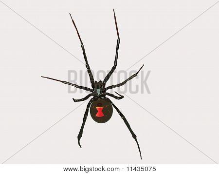 Vector Black Widow Spider